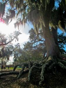 Louisiana_64
