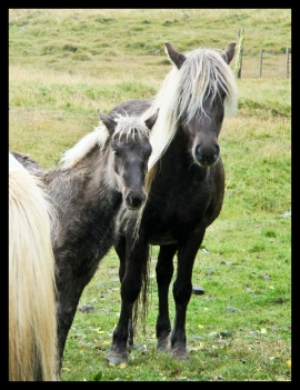 horses-framed